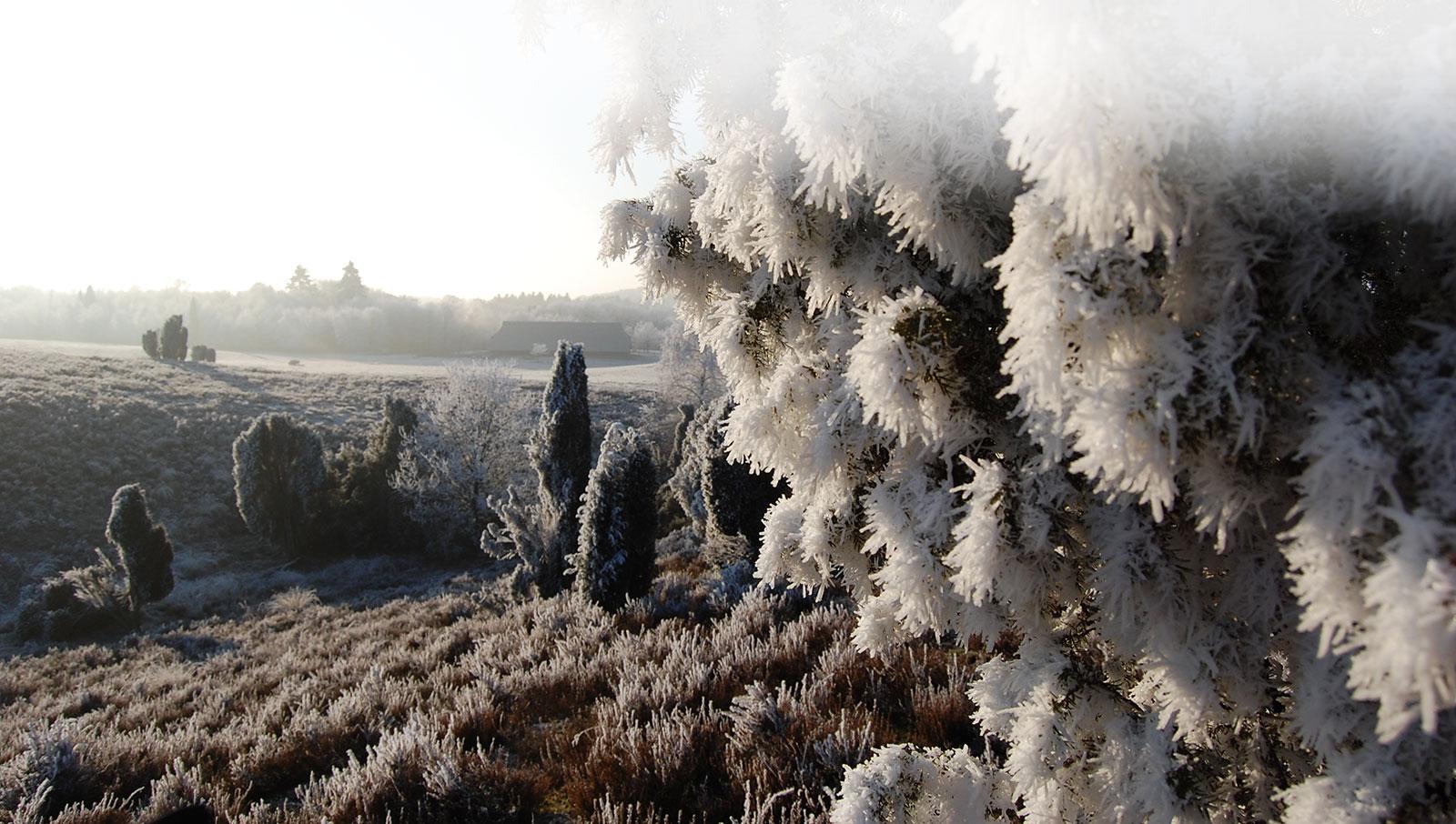 Winterbild-Heide